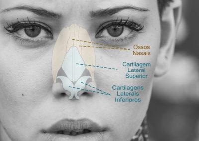 Anatomia-estrutura-nariz-rinoplastia-Luis-Felipe-Athayde