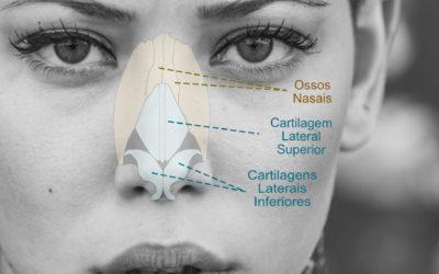 Anatomia Básica do Nariz