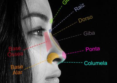 Anatomia-nariz-rinoplastia-Luis-Felipe-Athayde